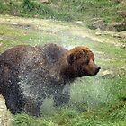Baby Bear Bath by Rhonda  Thomassen