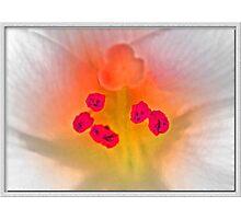 Blush Photographic Print