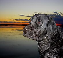 """"""" Boomer going home """" by ducilla"""