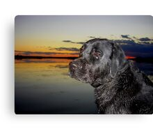""""""" Boomer going home """" Canvas Print"""