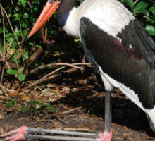 Saddle-billed Stork Sticker