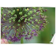 Beauty in bloom Poster