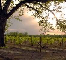 The Vineyard by charlena