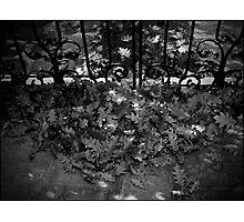 Urban Landscape # 3 Autumn's Gate Photographic Print