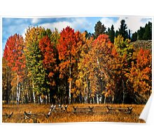 Oxbow Autumn Poster