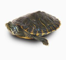 Leo-The Turtle by Ben Rees