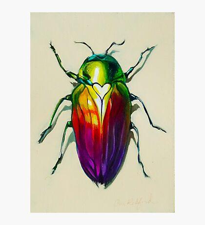 Love Bug Photographic Print
