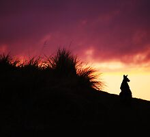 morning glory by Steve Scully