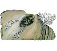 Mythical Flying Trilobite Fossil III Photographic Print