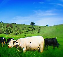 Cows in a Pasture by Nazareth