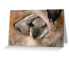 Red-necked wallaby (Macropus Greeting Card