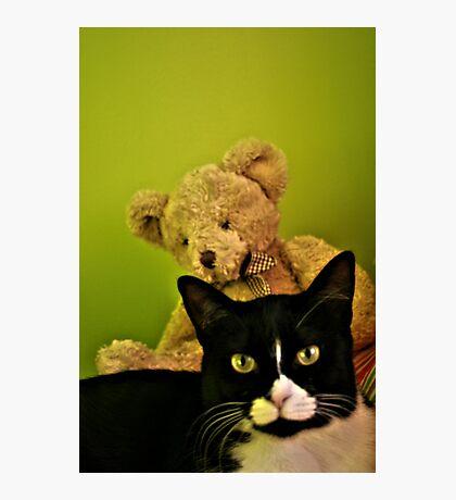 Big Teddy And Tuxedo Cat Photographic Print