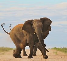 Elephant - Powerful Life by LivingWild