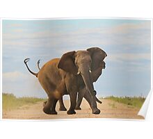 Elephant - Powerful Life Poster