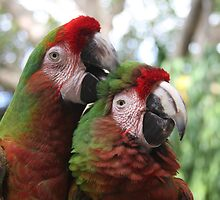 Parrot Couple by SinaStraub
