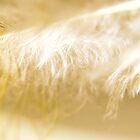 Feather Macro by Scott Mitchell