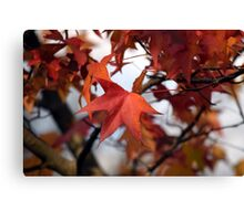 Fall Leaves Zoom Canvas Print