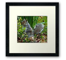 SQUIRREL HIDING IN THE GREENERY Framed Print