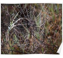 Spider Web with Water Doplets on a Foggy Morning Poster