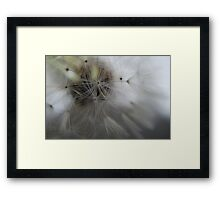 Nature's Fibre Optics Framed Print