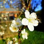 Beautiful Blossom by Vicki Spindler (VHS Photography)