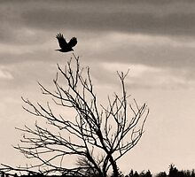 Crow I by Becky James
