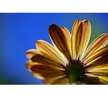 Daisy From Below Photographic Print