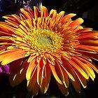 A Bit of Orange by Rusty Katchmer