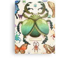 Beetle Collection Metal Print