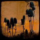 Rustic Teasels by gothicolors