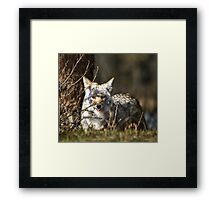 We eat, therefore we hunt.  Framed Print