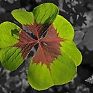 Need Some Luck? by Robert Abraham
