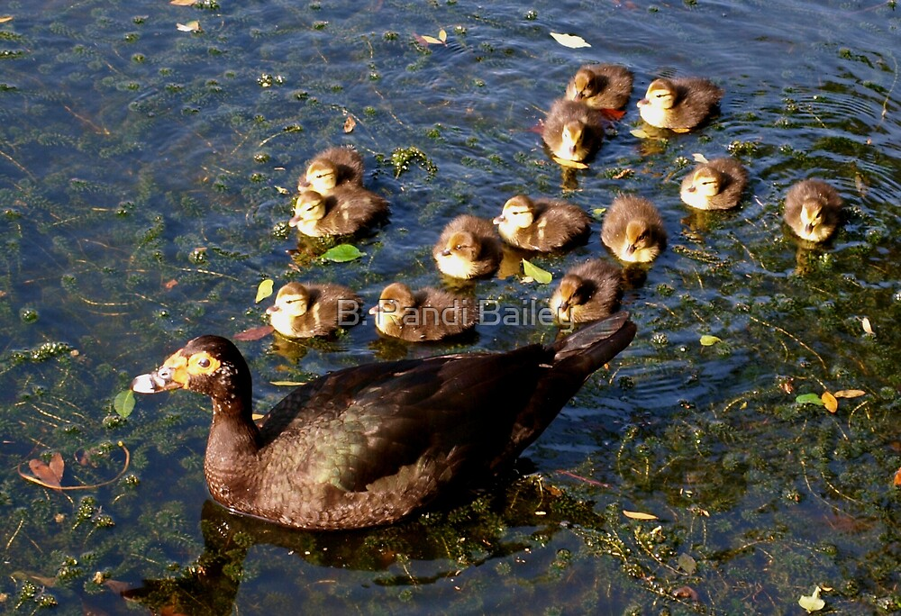 Muscovy mom and ducklings by ♥⊱ B. Randi Bailey