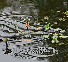 Water Snake by AlixCollins