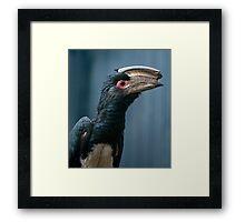 Speak to the Beak Framed Print