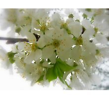 Springtime Delight Photographic Print