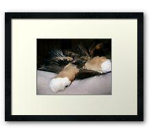 Cat Rap Framed Print