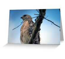 Majestic Red Shouldered Hawk Greeting Card