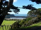 Wenderholm Regional Park, Auckland, New Zealand.......! by Roy  Massicks