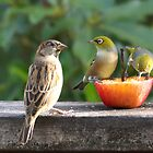 We don't serve Sparrows here........! by Roy  Massicks