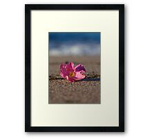 Rose Hip Blossom at the Beach Framed Print