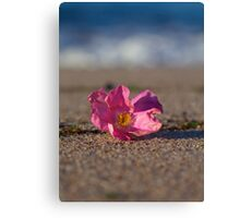 Rose Hip Blossom at the Beach Canvas Print