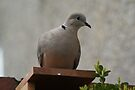 Dover On Bird Box. by davesphotographics