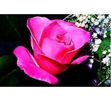 Roseville Rose Photographic Print