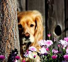 Stevey and the Tree by Polly Peacock