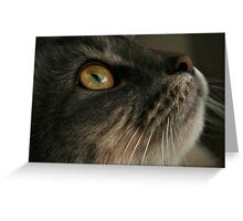 Look Up Cat Greeting Card
