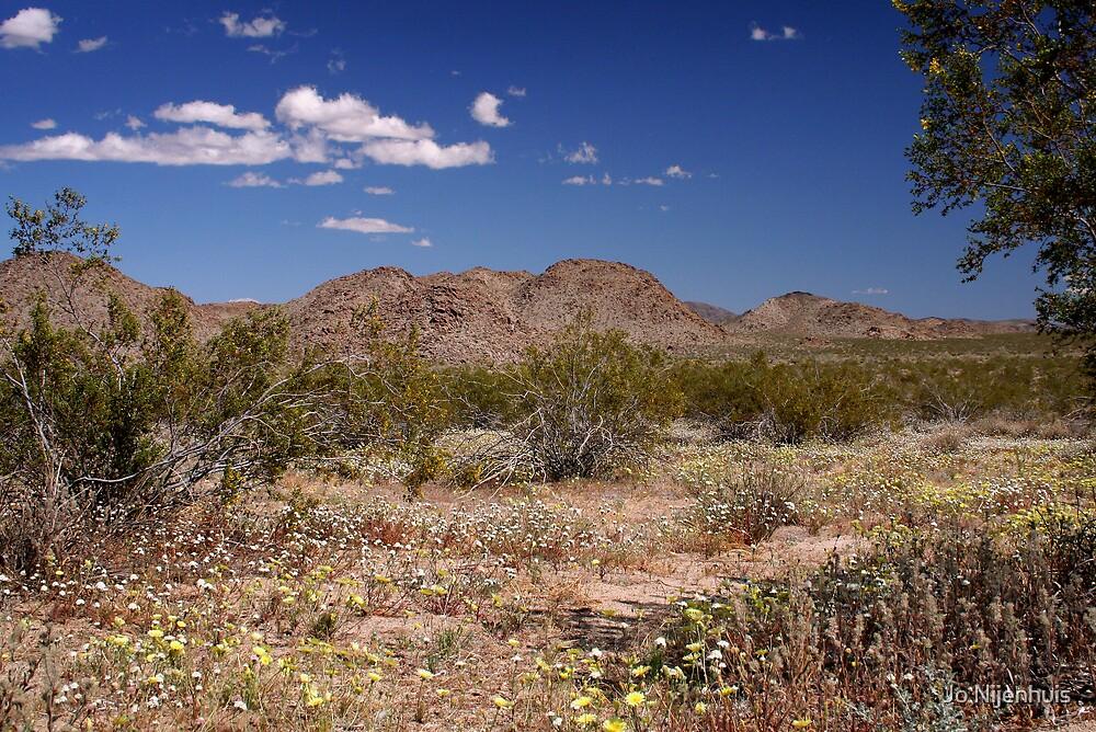 The Blooming Desert by Jo Nijenhuis