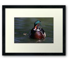 Wood Duck Drake Framed Print