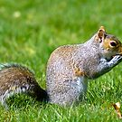 Spring Squirrel by Shannon Beauford