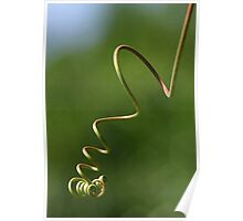 Spring Shaped Passion Flower Tendril Poster